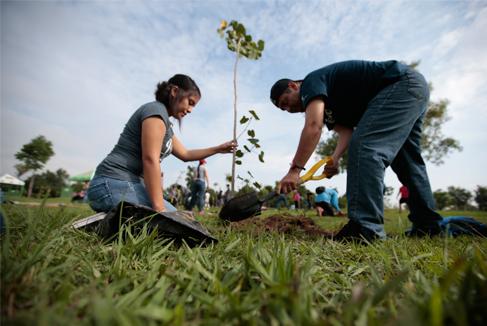 personas reforestando